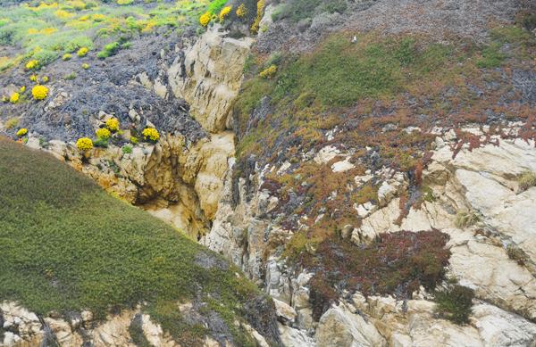 Pt. Lobos, Flattened image....