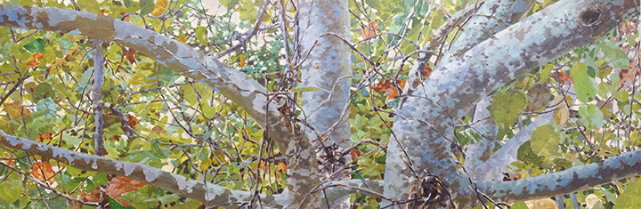"Sea Grapes  10"" X 40"""